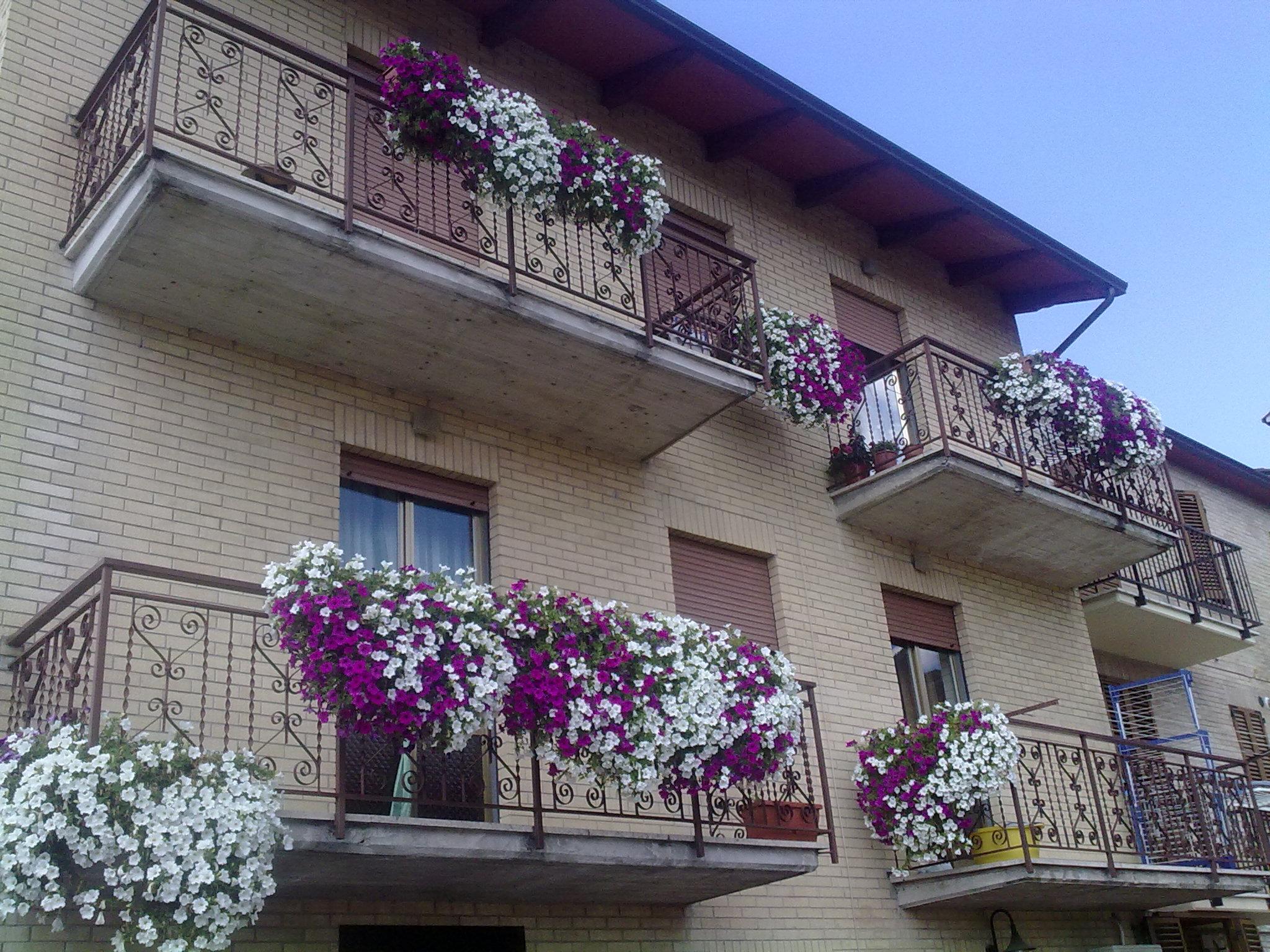 Fiori perenni da balcone con fiori da terrazzo piante e fiori da