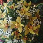 nido di orchidee