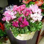 cestone_cilamini_consegna_fiori_pony_express_roma
