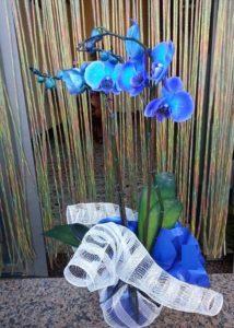 orchidea_blu