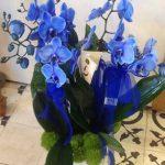 orchidee_blu