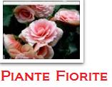 quanto_costa_mandare_fiori_interflora_roma